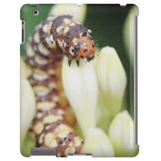 Caterpillar Larvae Of Lily Borer Butterfly