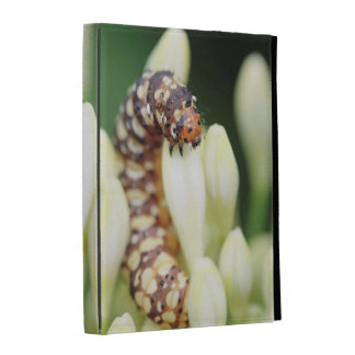 Caterpillar Larvae Of Lily Borer Butterfly iPad Folio Cover