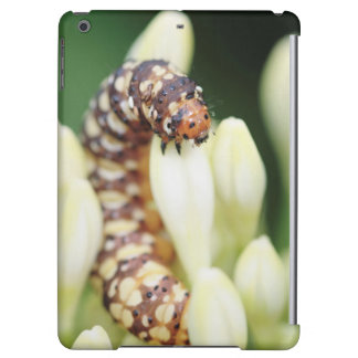 Caterpillar Larvae Of Lily Borer Butterfly Case For iPad Air