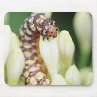 Caterpillar Larvae Of Lily Borer Butterfly Mouse Pad
