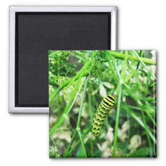 Caterpillar Magnet 2 Inch Square Magnet