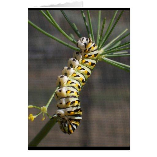 Caterpillar Notecard Tarjeta De Felicitación