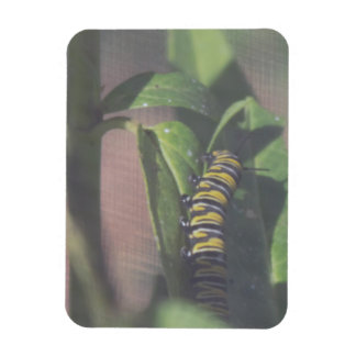 Caterpillar on a Leaf Photo Magnet