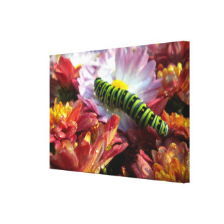 Caterpillar on Mums wrapped Canvas Gallery Wrapped Canvas