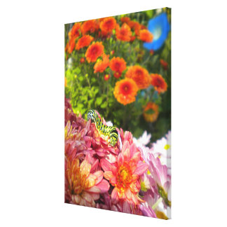 Caterpillar on Mums Wrapped Canvas Stretched Canvas Print