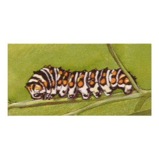 caterpillar photo card