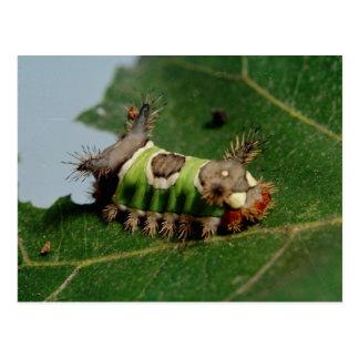 Caterpillar que come una hoja postales