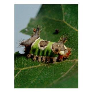 Caterpillar que come una hoja tarjeta postal