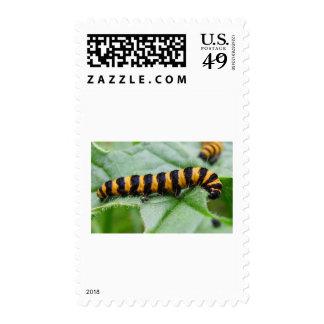 caterpillar stamps