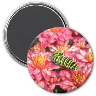 Caterpillar Stepping out Magnet