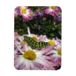 Caterpillar Stroll Magnet