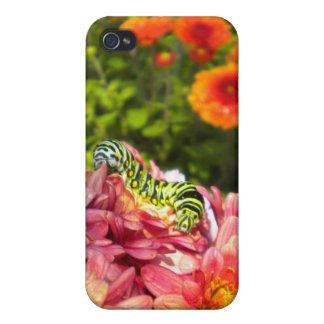 Caterpillar Sunning iPhone 4 case