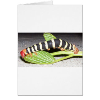 Caterpillar Thriller Card