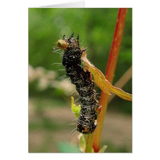 caterpillarEatingLeaf Greeting Card