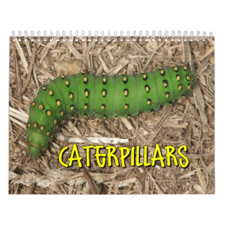 Caterpillars Wall Calendar