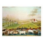 Catetos de Edward - la granja de Cornell Tarjetas Postales
