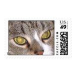 cateyes postage