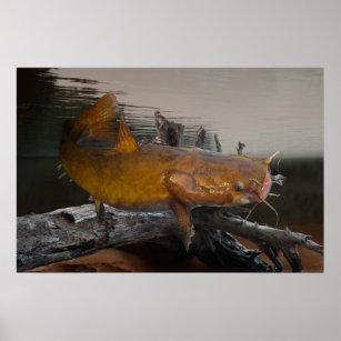 Flathead Catfish Gifts On Zazzle