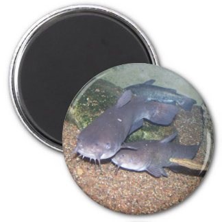 Catfish fishing zoo fridge magnet