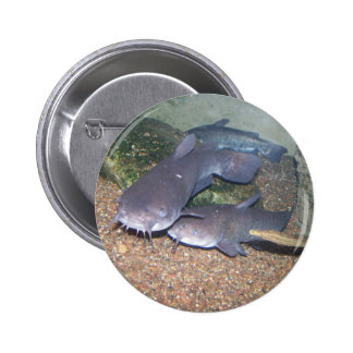 Catfish fishing zoo pinback button