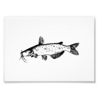 Catfish Illustration Photo