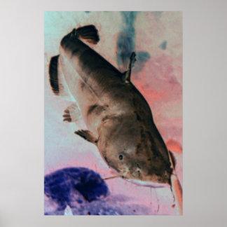 Catfish photo poster print