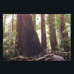 """Cathedral Grove Cloth Placemat<br><div class=""""desc"""">In Muir Woods National Monument,  where the Redwoods and Giant Sequoias live,  there&#39;s a ring of trees known as Cathedral Grove. This is what it feels like to walk through it.</div>"""