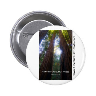 Cathedral Grove, Muir Woods California Products Pinback Button