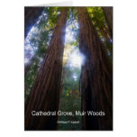 Cathedral Grove, Muir Woods California Products Card