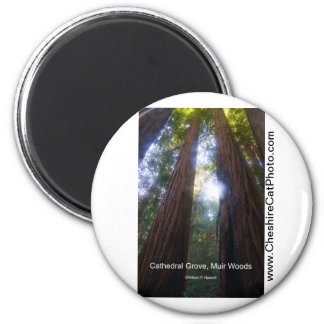 Cathedral Grove, Muir Woods California Products 2 Inch Round Magnet