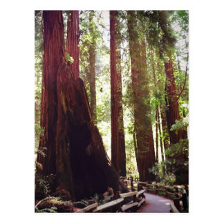 Cathedral Grove Postcard