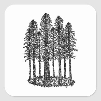 Cathedral Ring (Coastal Redwoods Sketch) Square Sticker