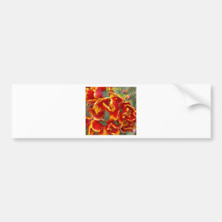 Cathedral tulips seasons greetings. car bumper sticker