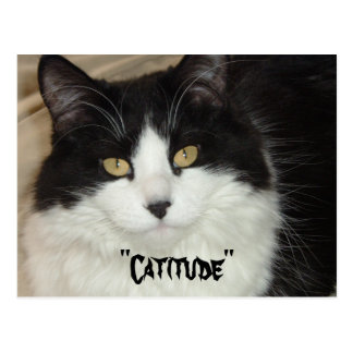 Catitude Cat with an Attitude Postcard