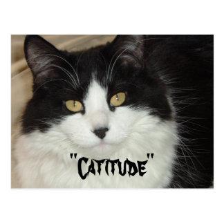 Catitude Cat with an Attitude Postcard