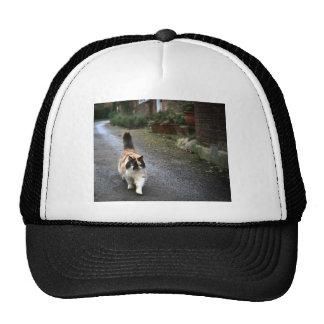 Catitude Trucker Hat