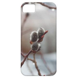 Catkin cubierto de rocio iPhone 5 fundas
