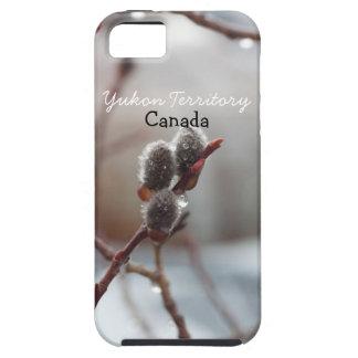 Catkin cubierto de rocio; Recuerdo del territorio iPhone 5 Carcasas