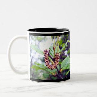 Catkins 1 Mug
