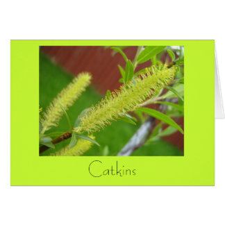 Catkins Greeting Cards