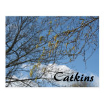 Catkins Post Cards