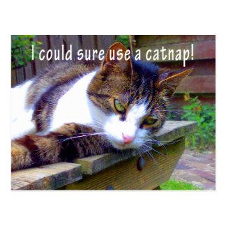 Catnap Cat Postcard