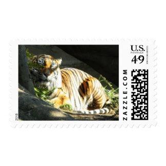 Catnap del tigre timbre postal