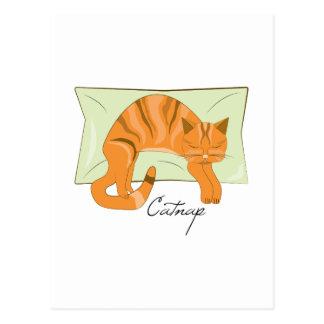 Catnap Postcard