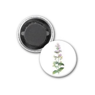 catnip, catnip branch, herb, plant, purple flower fridge magnets