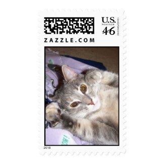 Catnip stamp
