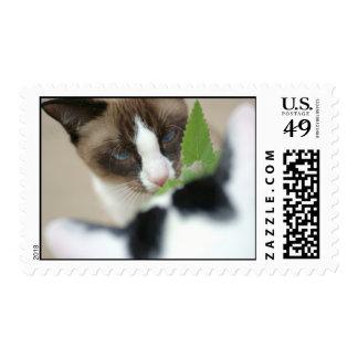Catnip Postage Stamp
