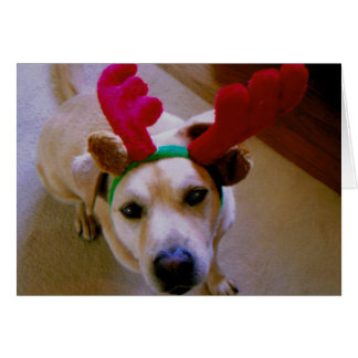 Cato Christmas Card : Wagging Tail