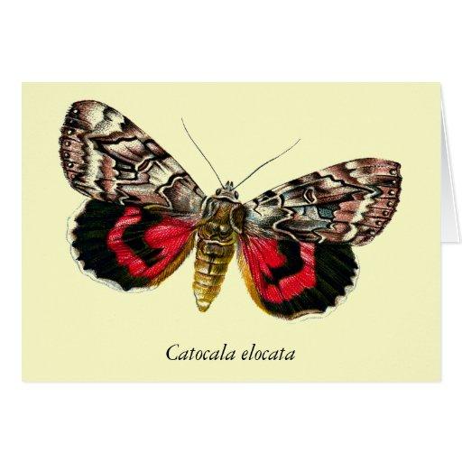 Catocala elocata - Customized Card