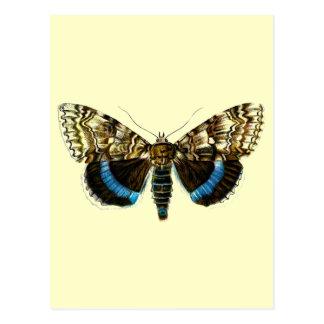Catocala fraxini post cards
